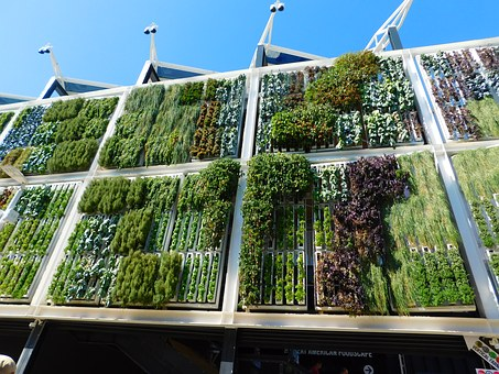 The Top Reasons Why You Should Get Green Walls To Your Home